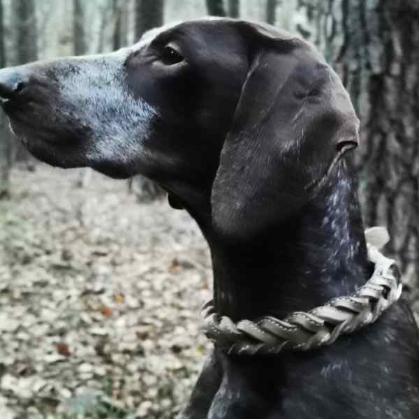 Leder Halsband geflochten von Jagdeinrichtung 24