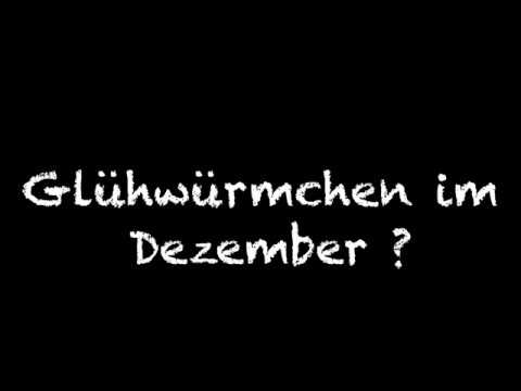 Glühwürmchen im Dezember ???