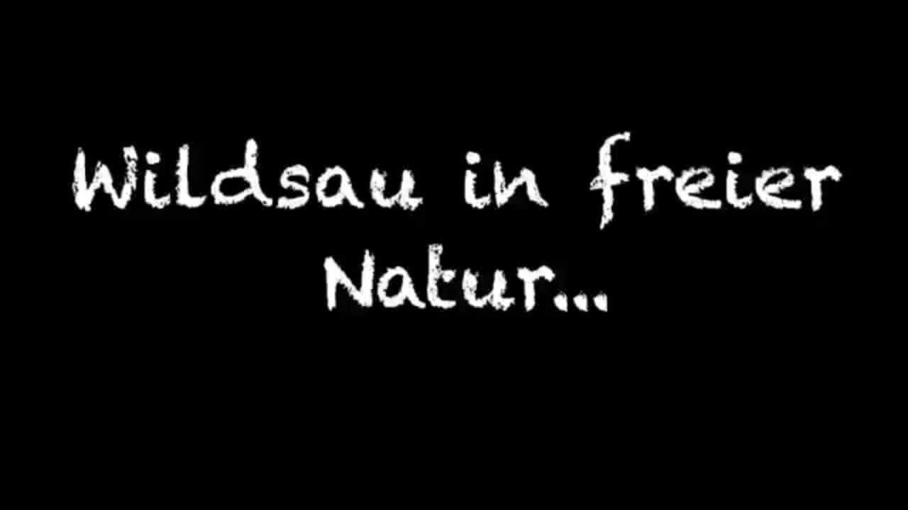 Wildsau in freier Natur