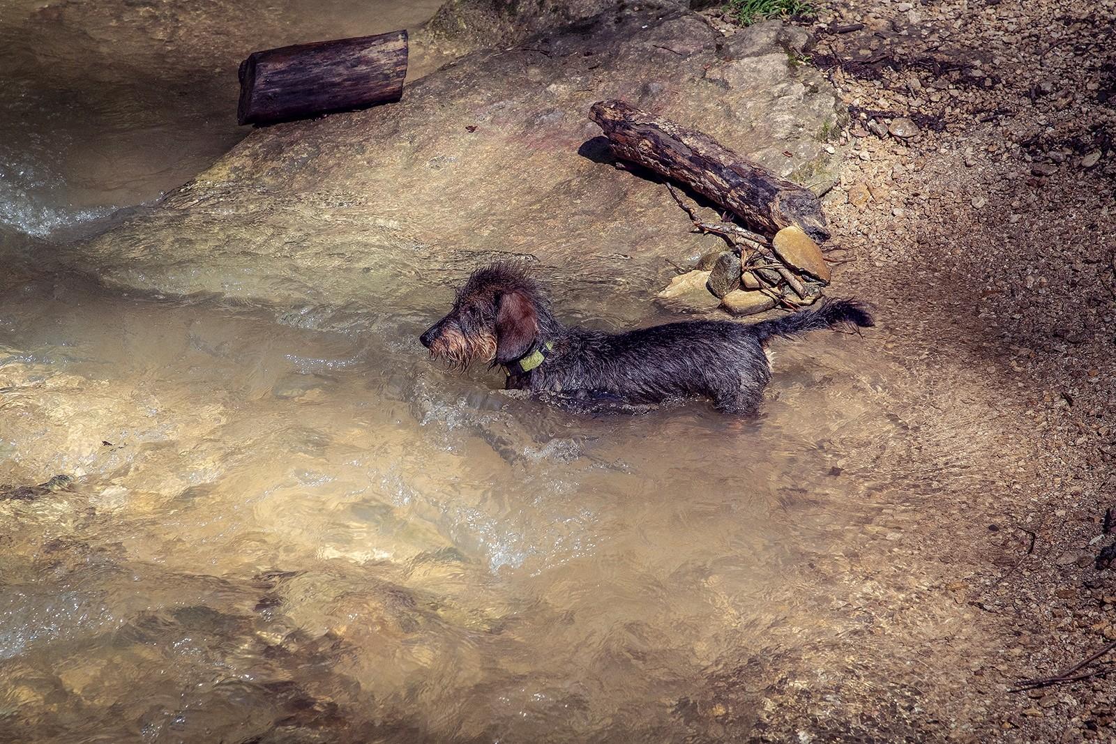 Jagdhunde: Dackel via @treierp