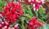 Marknad - rädisor