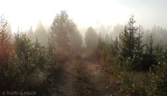 Solbelyst skogsväg