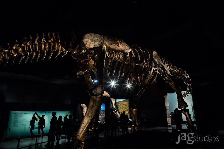 Museum of Natural History Engagement NYC JAGstudios