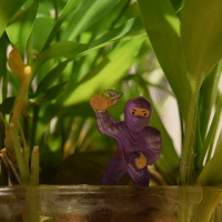 purple-ninja-hiding-small