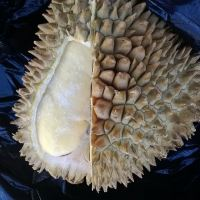 durian-fruit-frozen