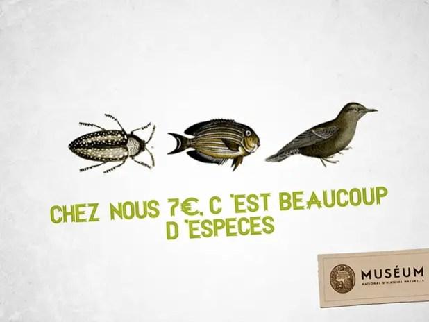 Chatons-dOr-Print-Quentin-Delachaux-2