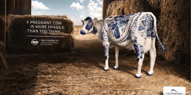 Une vache en porcelaine pour sensibiliser à la cause animale
