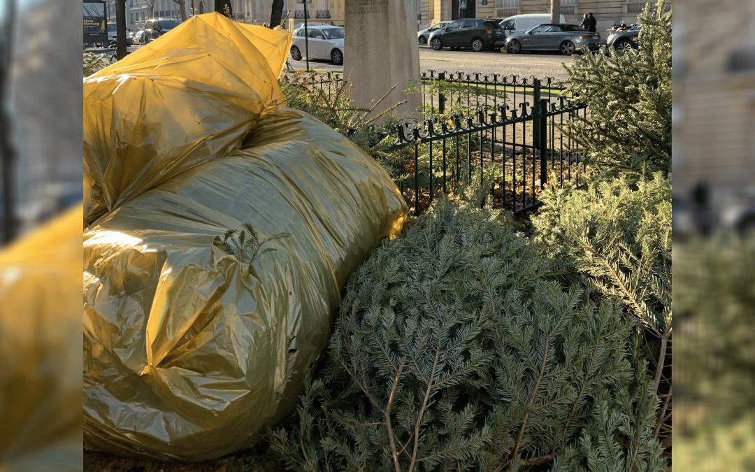 Les dates de la collecte des sapins de Noël dans votre commune