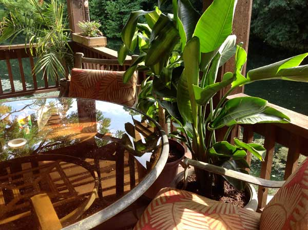 my deck with beautiful tropical plants during early summer