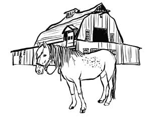 Illustration I drew of a horse in front of a barn - line drawing