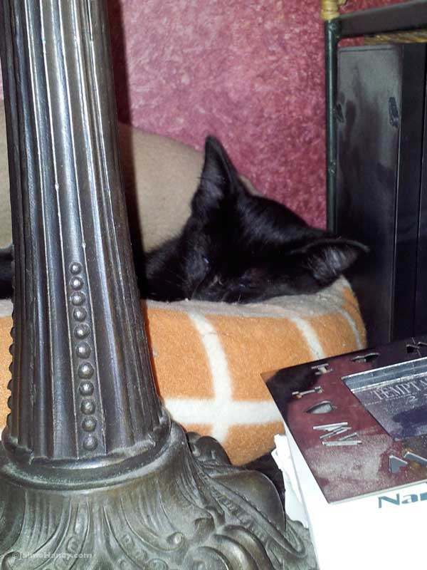 Black kitten sleeping in pet bed on desk