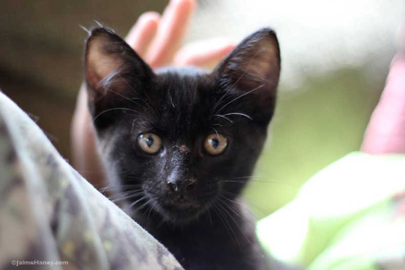 black kitten face