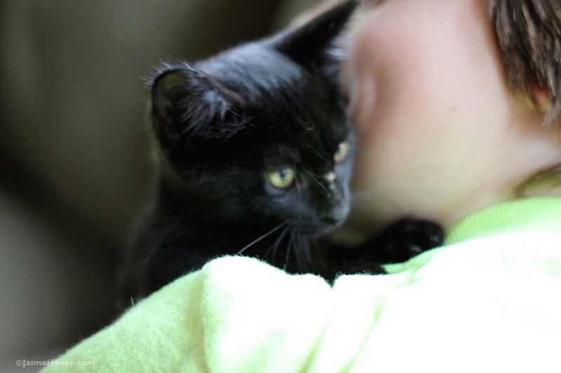 cute black kitten on shoulder of boy