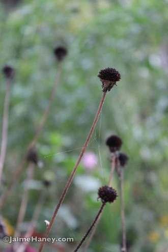 Jaime's-early-2014-fall-gardens---036