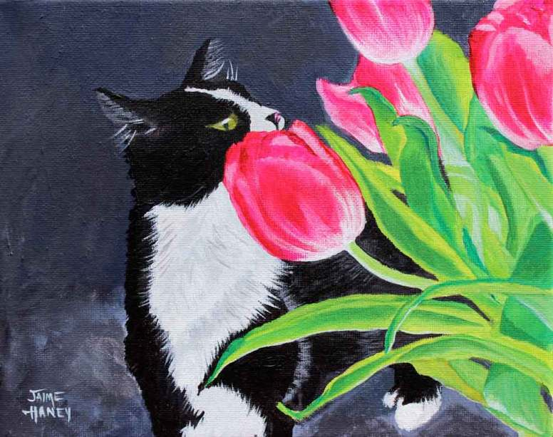 Black and white tuxedo cat smelling pink tulips