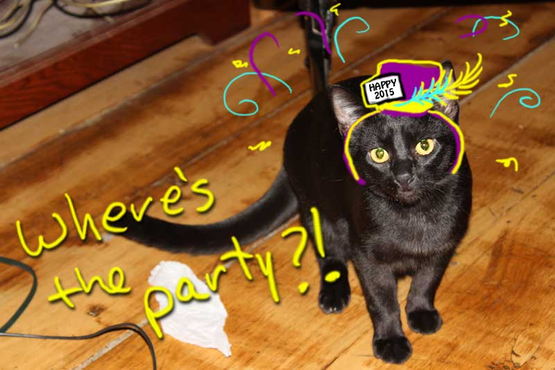 Black cat JuJu wearing party hat for New Years