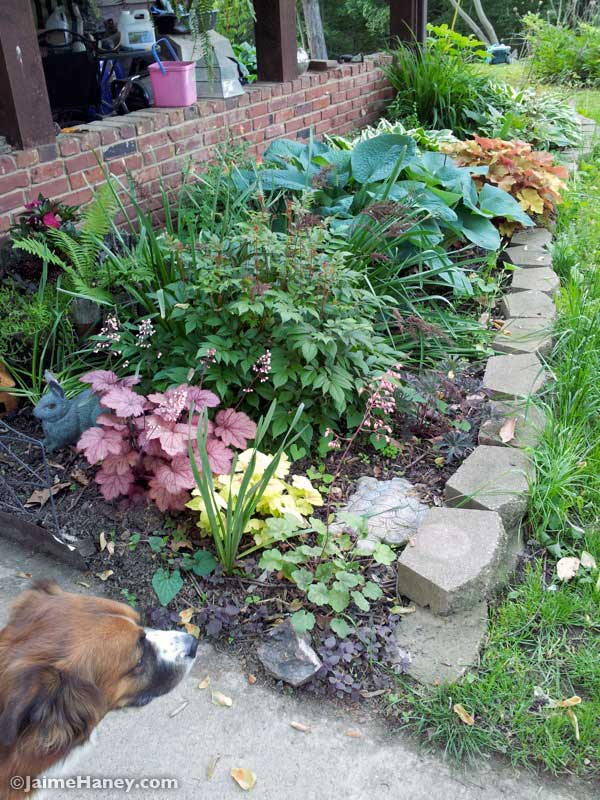 front of house shade garden