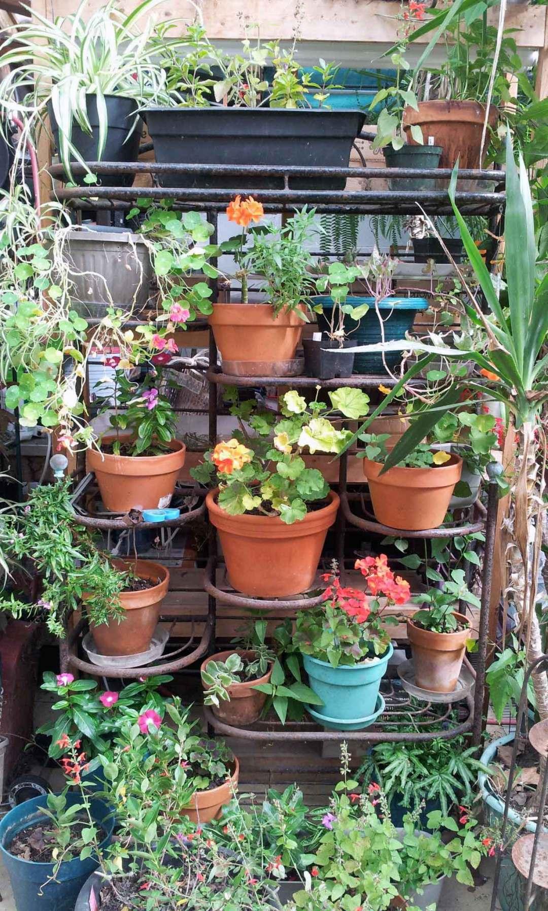 Bakers rack full of plants