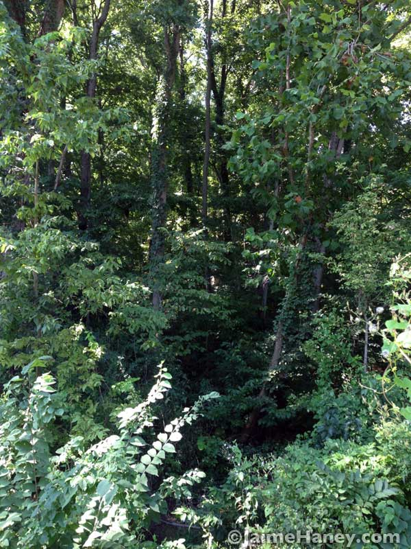 heavily wooded area