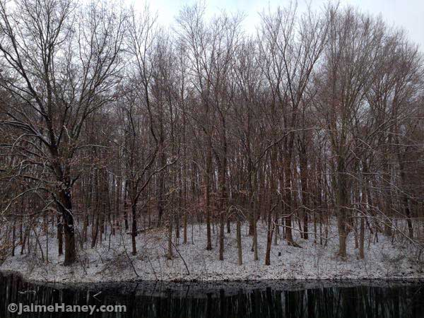 view from kitchen deck of lake and trees covered in snow
