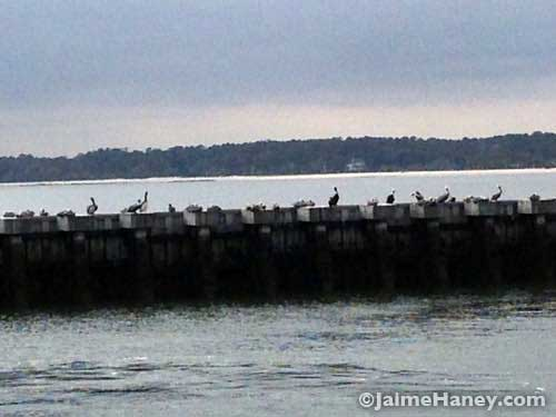 Pelicans gathered on the pier