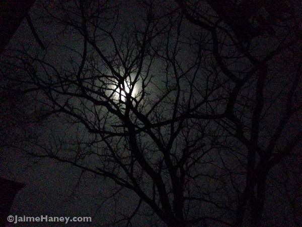 Full leo moon through trees