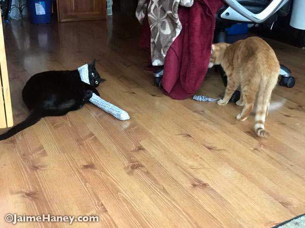 cats playing with homemade tube toy
