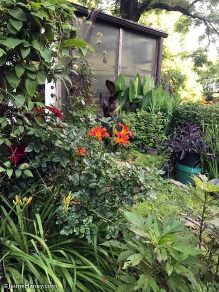 my inspiration garden