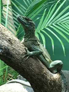 zoo lizard inspiration