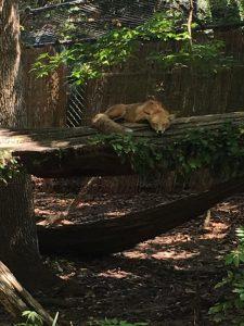 fox zoo inspiration