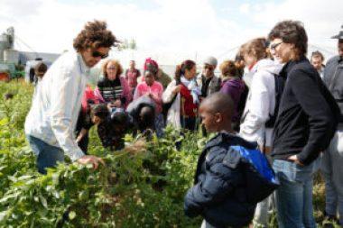 La maraicher explique au public à différencier les adventices des plants de céléri.