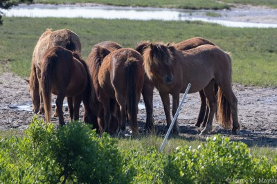 Group at the watering hole
