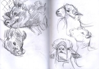 SF_15_sketches3
