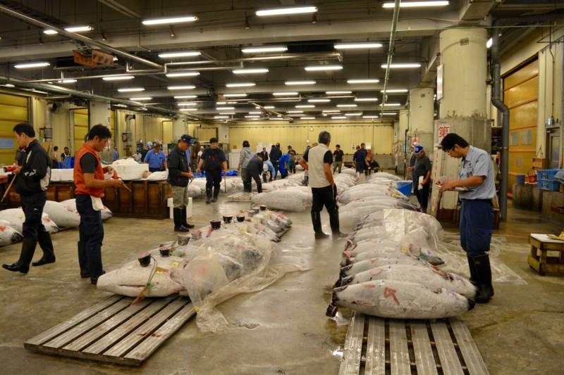 Tokyo Reisverslag Tsukiji Fish Market Tuna Auction