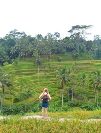 Tegalalang rijstvelden Ubud Bali www.jaimyskitchen.nl