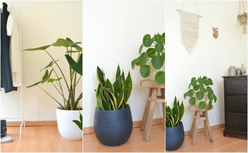 slaapkamer planten plantje.nl - Jaimy\'s Kitchen