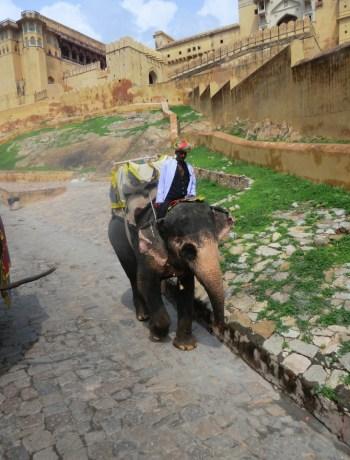 Jaipur India www.jaimyskitchen.nl