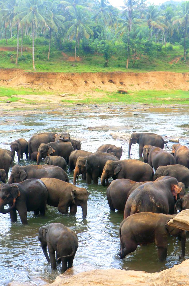 Sri Lanka reis tips www.jaimyskitchen.nl