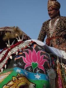 Elephant et cornac parés à Jaipur