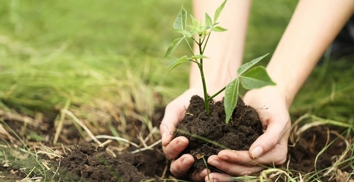 One and a half lakh saplings will be planted in the assembly area under Hariyalo Bytu