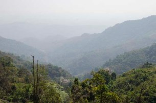 Les forêts autour de Muang Sing à la frontière chinoise