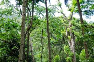 L'île de Camiguin - Philippines - L'entrée de Jurassic Park