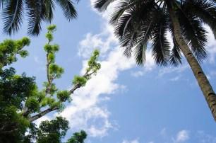 L'île de Camiguin - Philippines - Palmsky