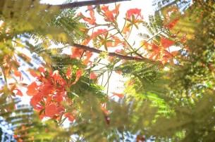 L'île de Camiguin - Philippines - Un beau motif de nappe