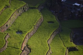 Les rizières de Batad