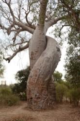 allée des baobabs - Madagascar - Tour du monde - jaiunouverture