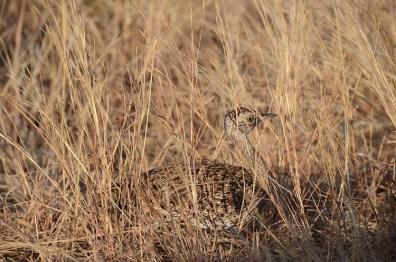 le parc Kruger - Afrique du Sud - Tour du Monde - jaiuneouverture