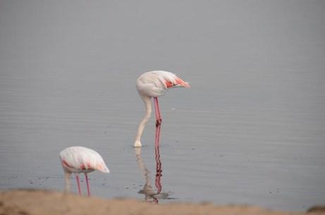 Walvis bay et les flamands roses - Namibie - Tour du Monde - Jaiuneouverture