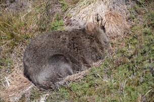 Le Cradle Mountain en Tasmanie - Jaiuneouverture - Tour du Monde (52)