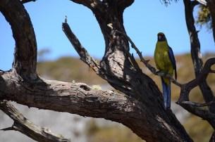 Le Cradle Mountain en Tasmanie - Jaiuneouverture - Tour du Monde (62)